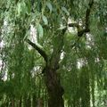 drzewa (5)