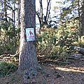 Chute d'arbres