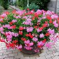 Ff.. fleurs de Mamie et Papi