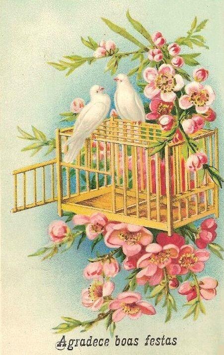Cage rose (1)