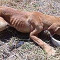 Chase, Zuma, Marcus, Rocky 2 - 4 chiots squelettiques jetés un mutilé 2