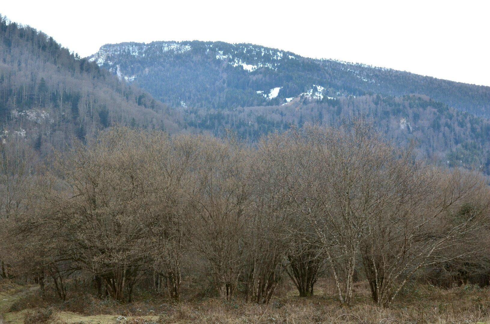 Les hautes sapinières et prairies de Barlagne enneigées...