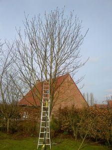 arbre droit av