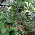 Serre Amazonienne (68)