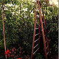 Windows-Live-Writer/jardin_D005/DSCF3881_thumb