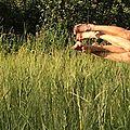 Des aimants dans les blés 3 Marc