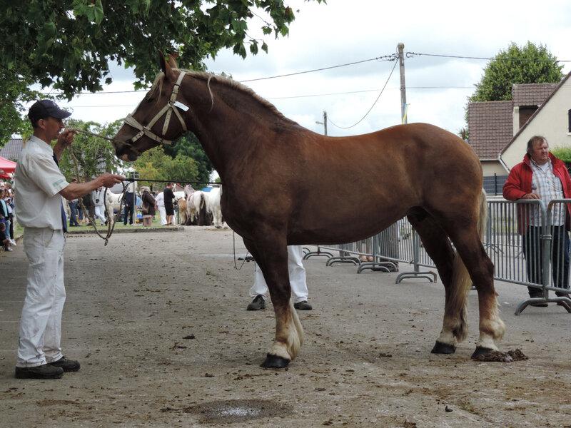 Bohême du Boncoin - Concours d'élevage local d'Arneke (59) - 7e (Non Suitées)