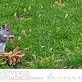Abécédaire photo lettre e écureuil