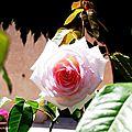 1-Fleurs de Léon 060817
