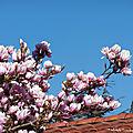 Fleurs de Léon 230219