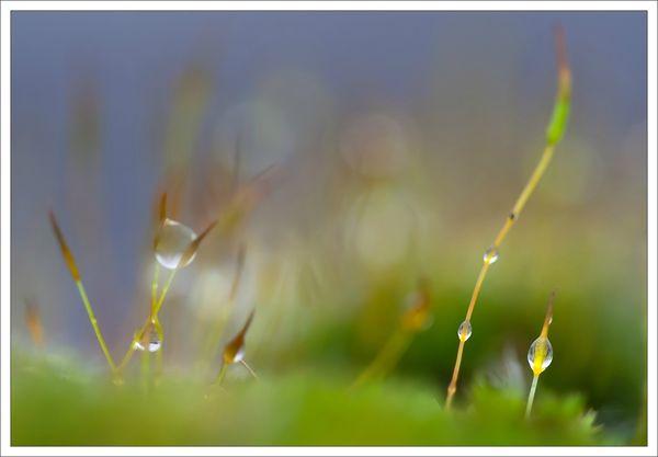 ville mousse fleurs pluie 221212 2