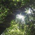 Serpent enroulé sur une branche