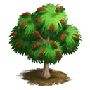 tree_general_casuarina_generic_icon-932136497dfffcf3c7fd4530