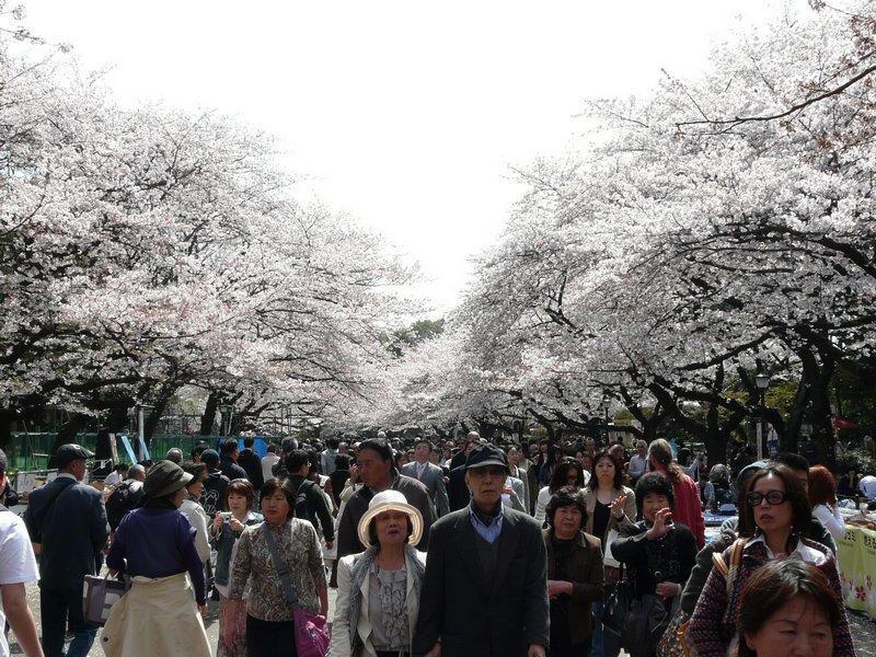 Canalblog Tokyo Cerisier 2010 Ueno Parc09
