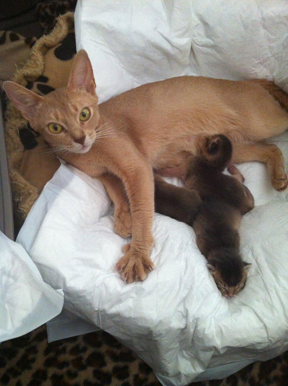 News: Naissance des BB de féline et Gizeh le 27 Août 2014