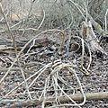 La forêt rhénane
