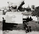 1878_taureau_1