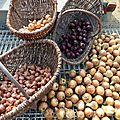 oignons et échalottes www.passionpotager.canalblog.com