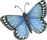 papillon_8