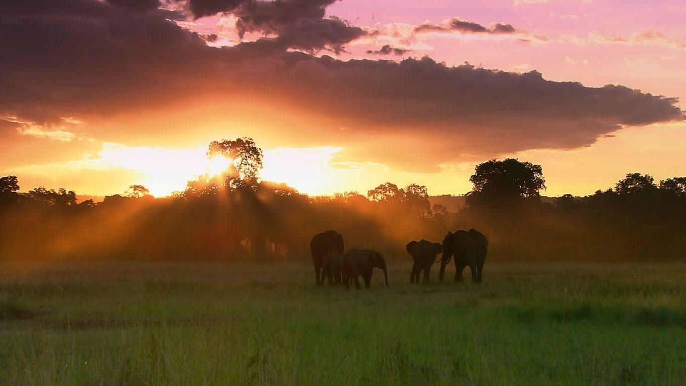 Elephants_Getty_893-36_FR-FR2128102809