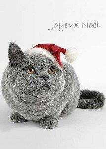 Chat_noel