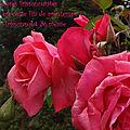 Haïku-image roses frissonnantes