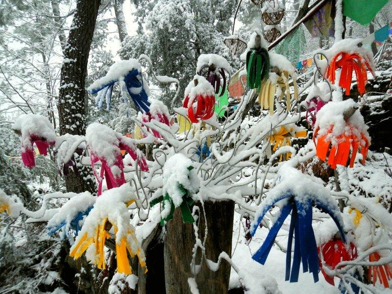 fleurs fictionnelles sous la neige