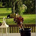 Windows-Live-Writer/jardin_D005/DSCF3919_thumb
