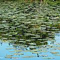 Balade au Lac 030818160