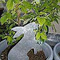 Lapin gourmand pique-fleur en zinc (3)
