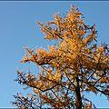 2012_11_11-POM-P1140513