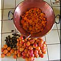 Abricots 5 kg