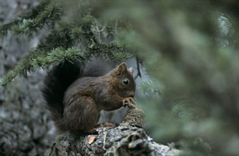 pyrénées écureuil