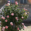 fleurs2 002