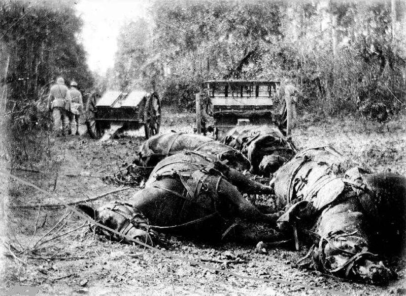 Chevaux morts pour la France