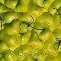 fruit-vert1