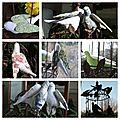 2012 - oiseaux de Tilda