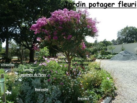 potager fleuri 23 aout 2012 noms (4)