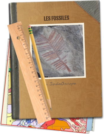 Les-fossiles