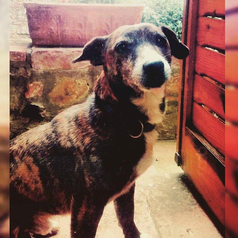 chien silvia 3