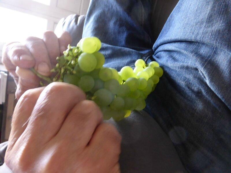 31-raisins (12)