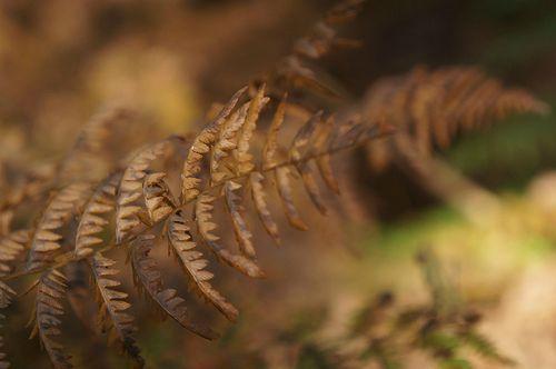 Le brun de la forêt