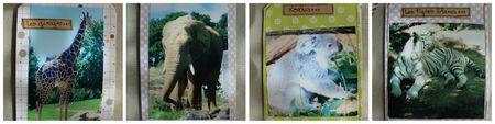 PicMonkey zoo