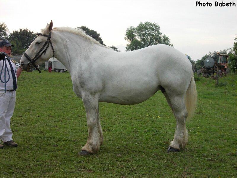 Vanille de Bernaville - Concours élevage local - Bernaville (80) - 1er juin 2014 - 2e