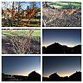 Les mois d'hiver - les hamamélis