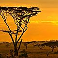 870_kalahari_sunset