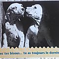 Animaux - Chiens