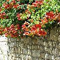 Juillet 2010 Mariage Blandine-Oléron-Gap 488