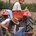 La récolte de pommes de terre ...