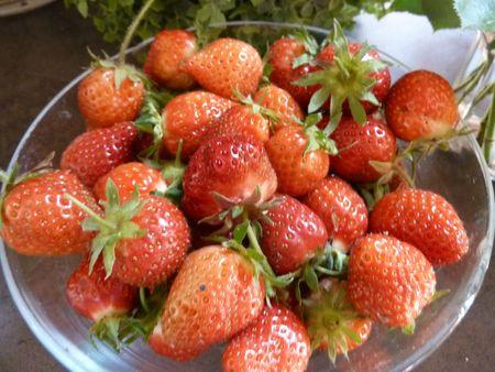 14-premières fraises (3)